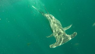 Befriending sharks: How are students at the University of Miami spending their summer?
