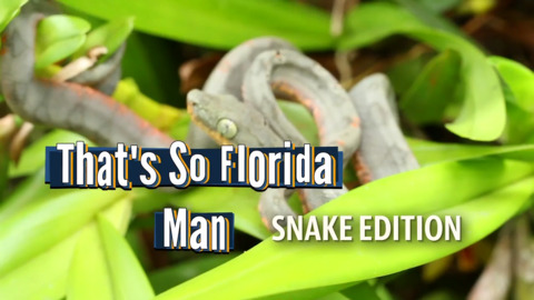 That's So Florida, Man: Snake Edition