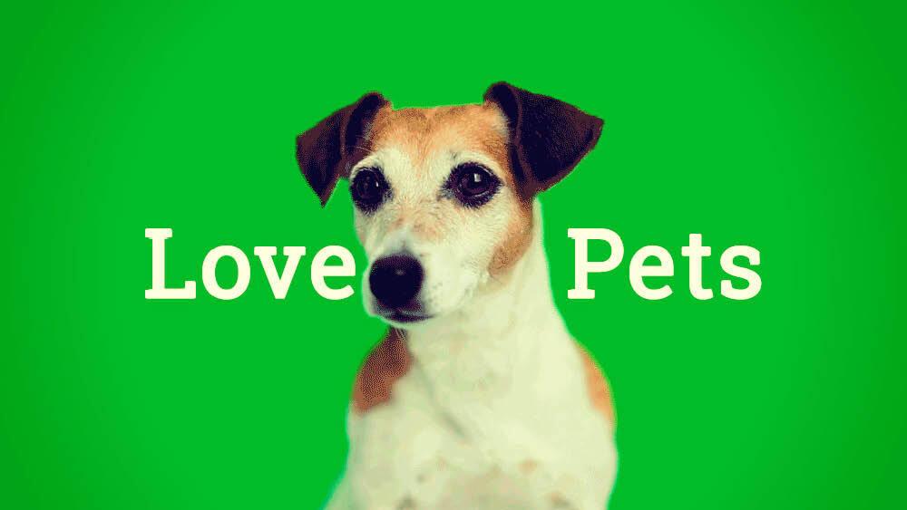 Pet | Definition of Pet at Dictionary.com