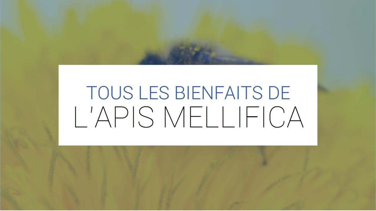 Apis Mellifica - Dans quels cas l'utiliser ? (Bienfaits et conseils)