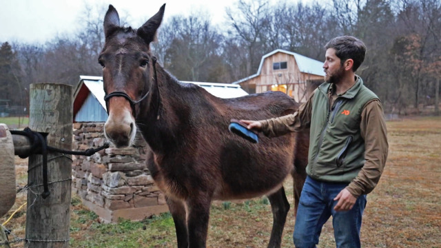 How to Saddle a Horse or Mule with Clay Newcomb