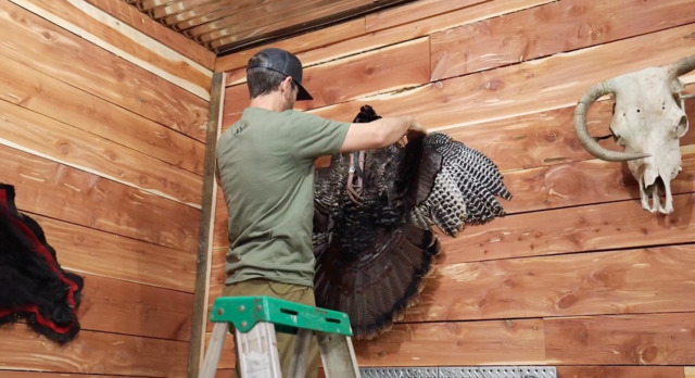 How to Mount a Turkey Cape with Clay Newcomb