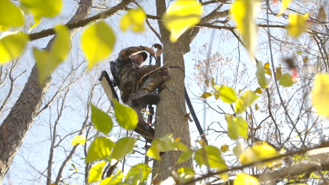 S1-E01: How Quickly Will Bucks Respond to Hunting Pressure?