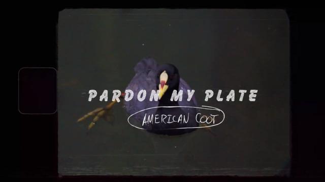 S1-E02: American Coot
