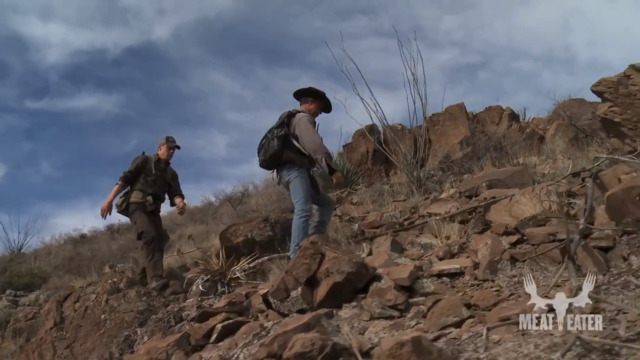 Hunting Mountain Lion with Dogs
