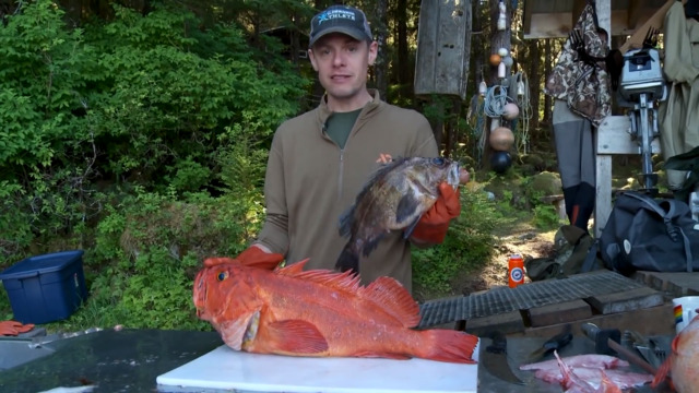 How To Clean and Fillet a Rockfish