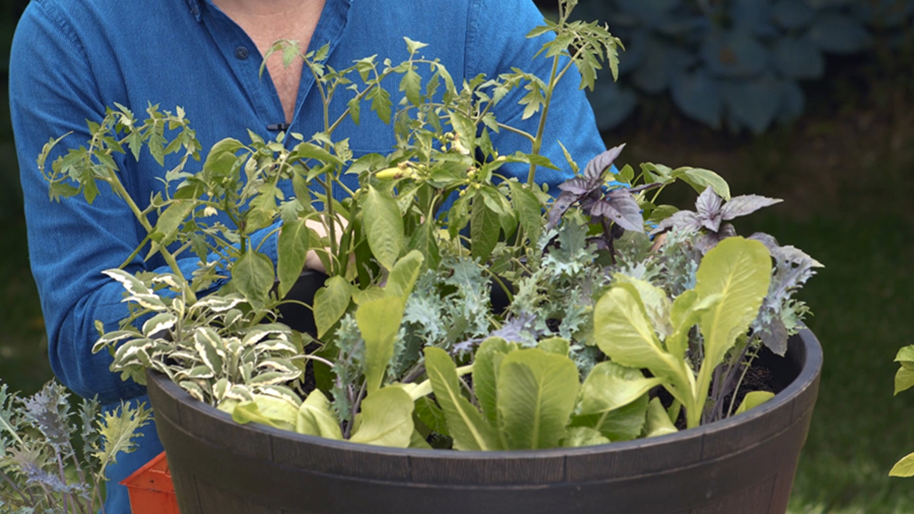 Growing Vegetables in Containers | Better Homes & Gardens