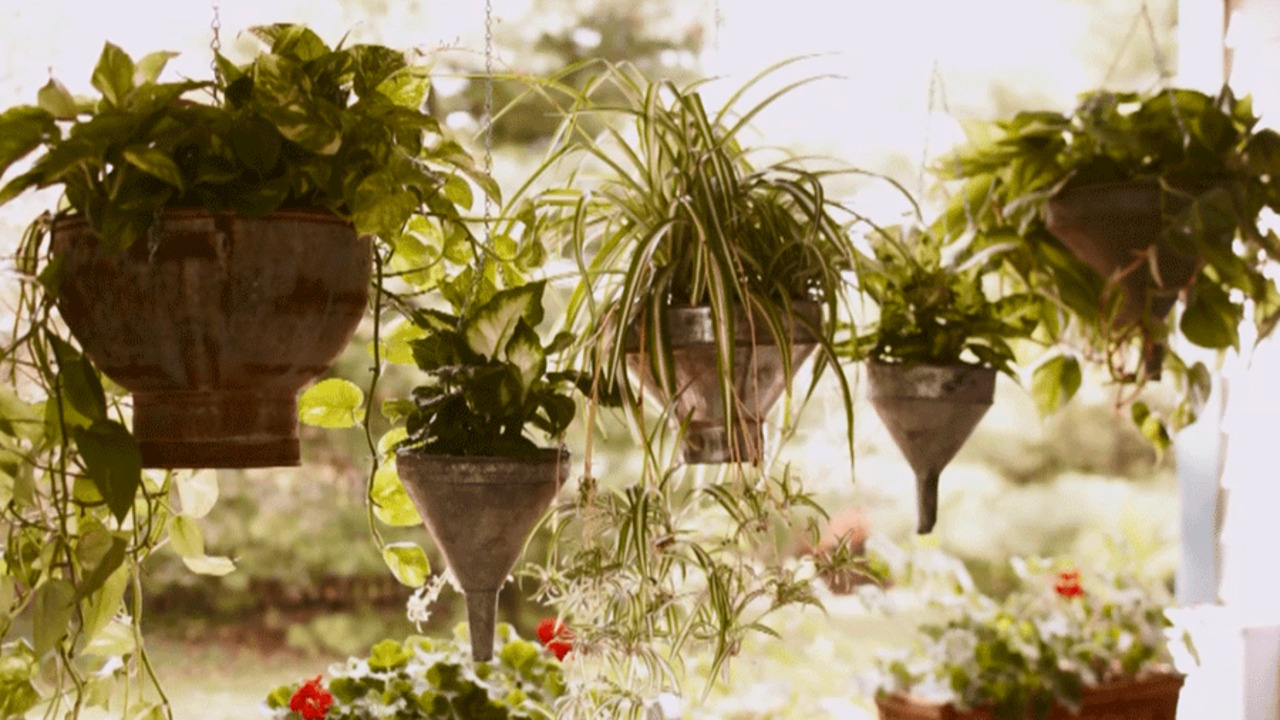Video: Design Tips for Hanging Baskets