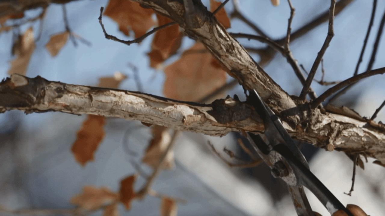 Video: Pruning Checklist