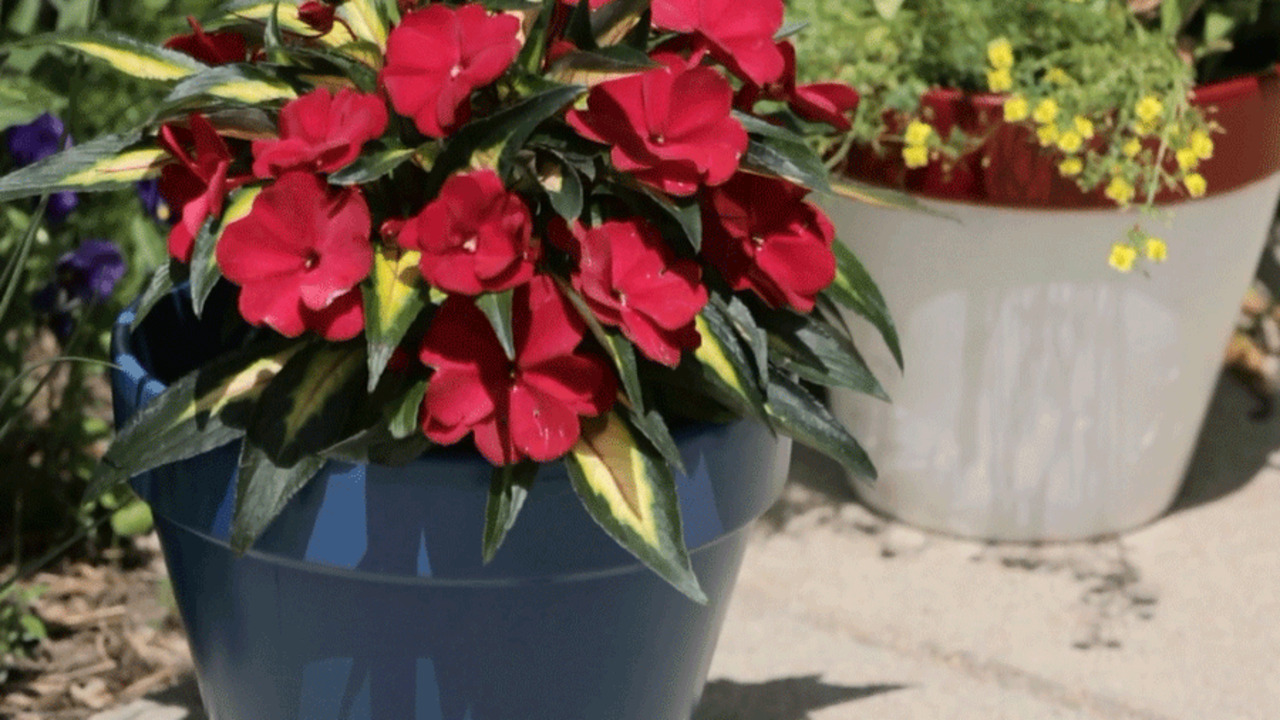 How to Paint Flower Pots