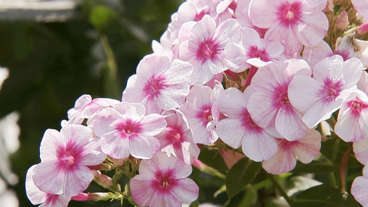 Video: Make a Fragrant Garden