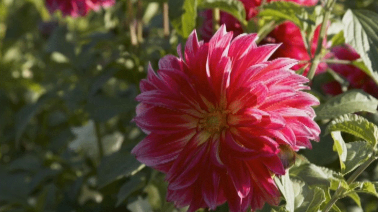 Top Summer-Flowering Bulbs
