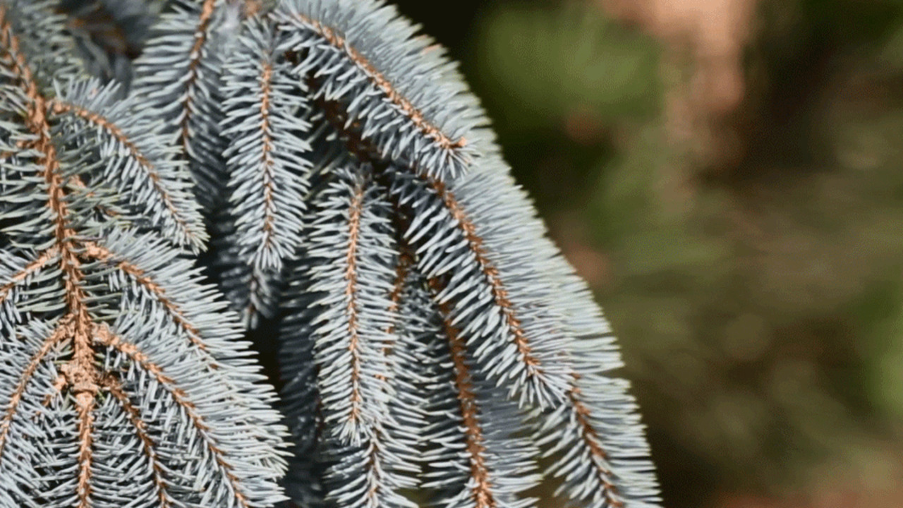 Top Evergreens for Your Landscape