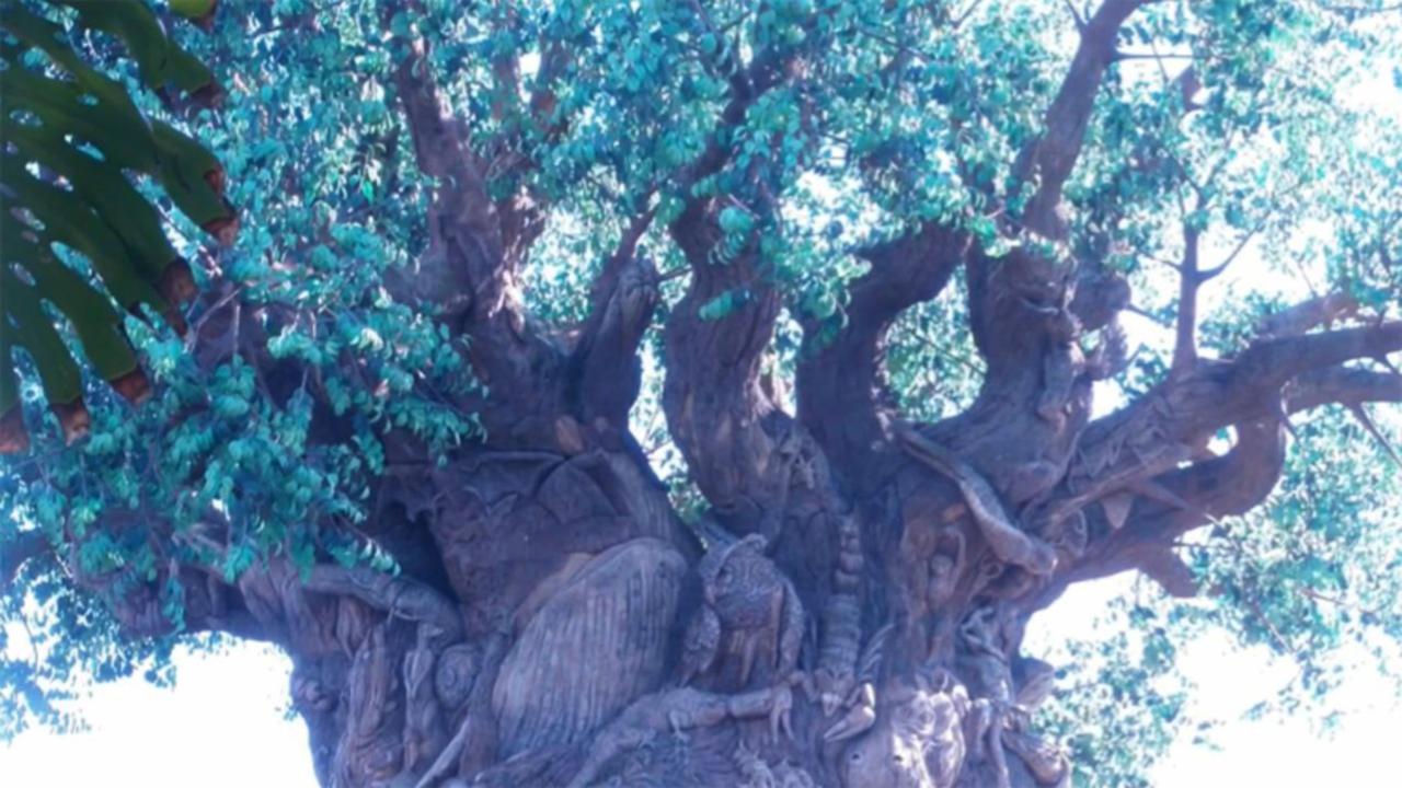 Walt Disney World's Animal Kingdom: What to See