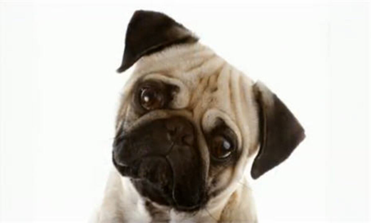 Video: Dog Expressions and What They Mean
