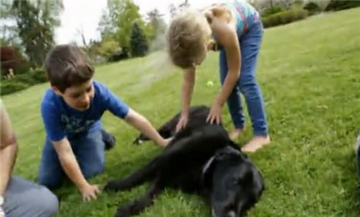 Video: How to Train a Dog with Kids