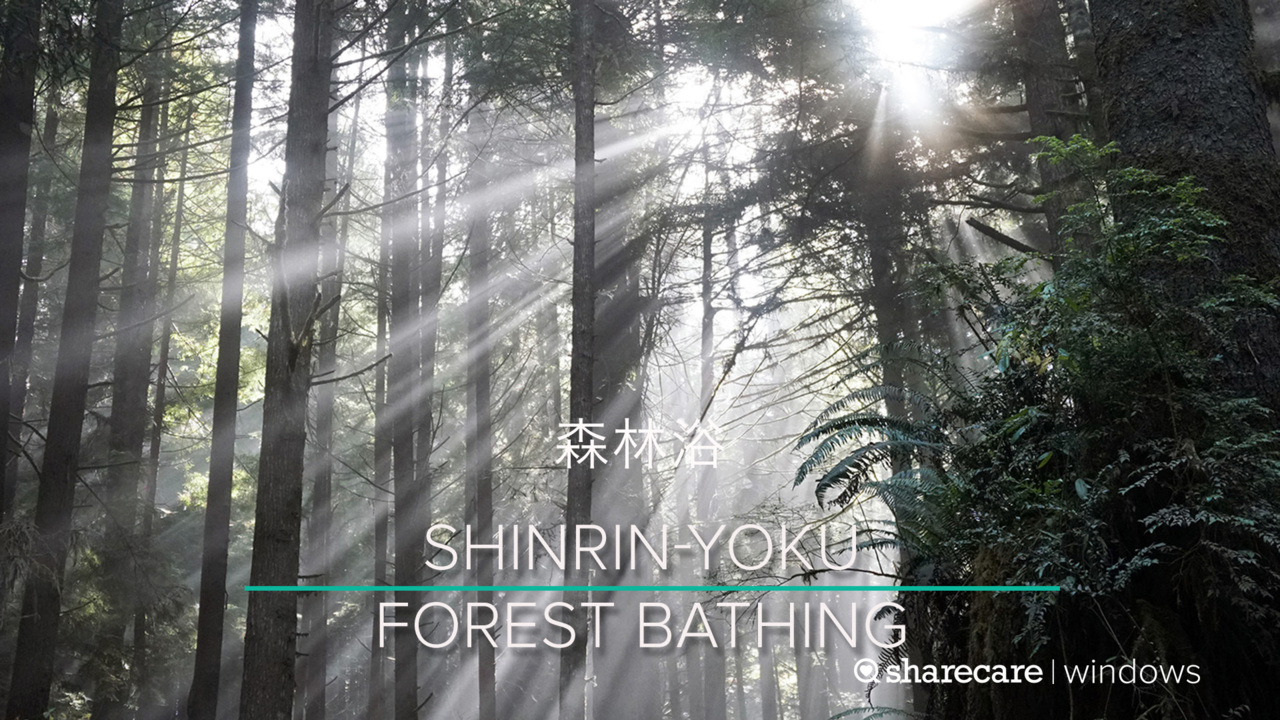 Relax Your Mind with Forest Bathing