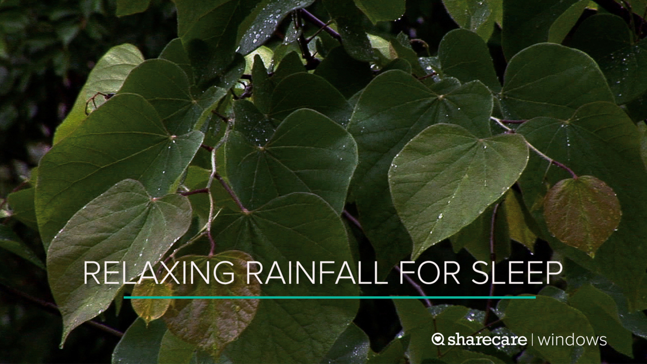 8 Hours of Relaxing Rainfall for Sleep (Ultra Low Light)