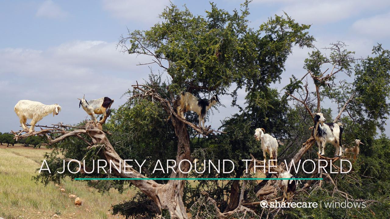 A 30-Minute Journey Around the World
