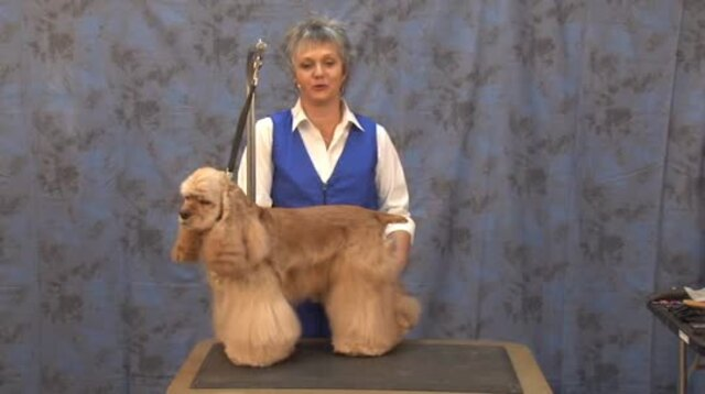 Thumbnail for Grooming the American Cocker Spaniel