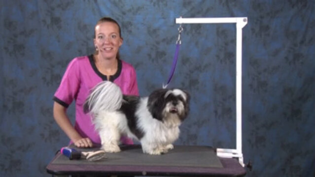 Thumbnail for How to Give an Attractive Haircut to a Matted Pet Without Losing Time (Part 1 of 5-Part Series)