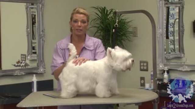 Thumbnail for Feeling the Body of a Westie Before Starting the Trim