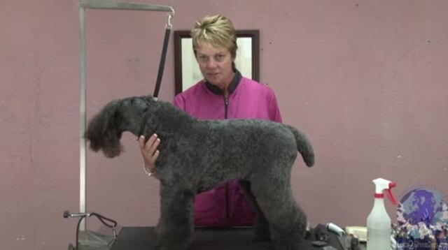 Thumbnail for Common Grooming Mistakes on a Kerry Blue Terrier: (Part 1 of 4-Part Series)