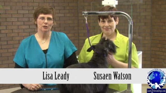 Thumbnail for Presenting your dog to the Grooming Judge or Certifier