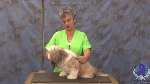 Thumbnail for Getting 'er Done Series: Grooming a Shih Tzu in a Teddy Bear Trim