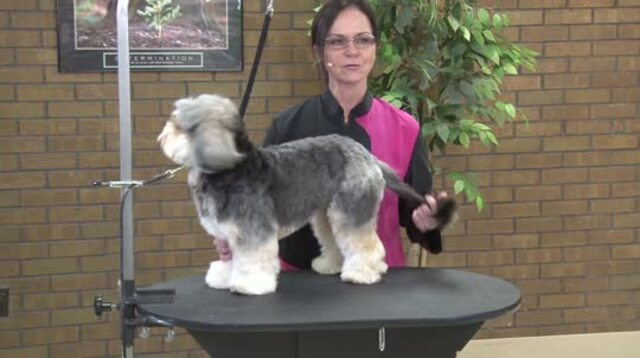 Thumbnail for How to Create a Stylish Salon Trim with Ease on a Charming Mixed Breed (Part 1 of 4-Part Series: Opening & Blocking the Body)