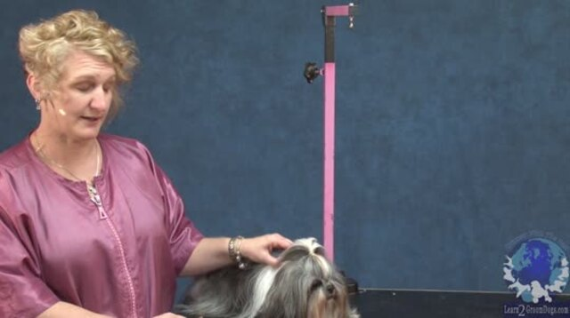 Thumbnail for Grooming a Full Coated Shih Tzu in an Outlined Layer Cut
