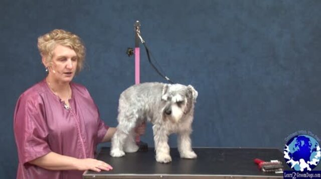 Thumbnail for Grooming the Pet Miniature Schnauzer (Part 1 of 3-part Series)
