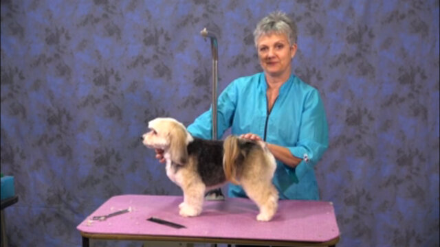 Thumbnail for How to Do an Easy Pet Trim on a Beagle Mix