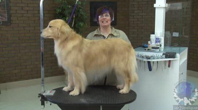 Thumbnail for Grooming the Golden Retriever