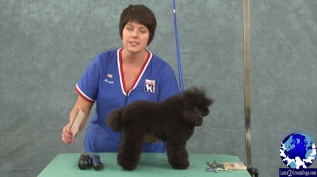 Thumbnail for Grooming the Toy Poodle in a Sporting Dog Trim (1 of 3-part Series)