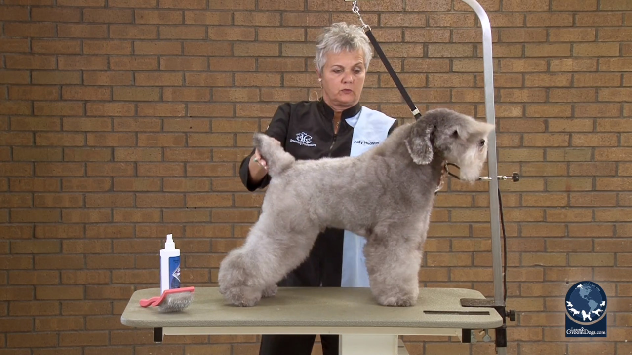 Thumbnail for Grooming a Silver Poodle Like a Kerry Blue (Part 1 of 3)