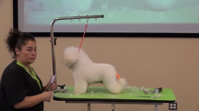 Thumbnail for How to Trim the Eye Area and Top of the Head on a Show Style Bichon