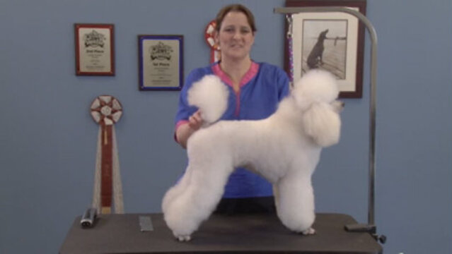 Thumbnail for Retro Poodle Trims: Seven Styles – One Dog (Part 1 of 6-Part Series: Opening and Puppy & Lamb Trims)