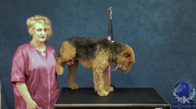 Thumbnail for Grooming the Airedale Terrier: How to Set the Body Pattern (1 of 4-Part Series)