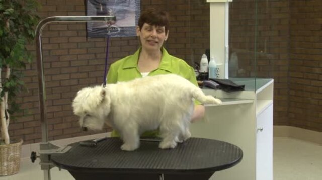 Thumbnail for Grooming the Pet West Highland White Terrier (Part 1 of 3-Part Series)