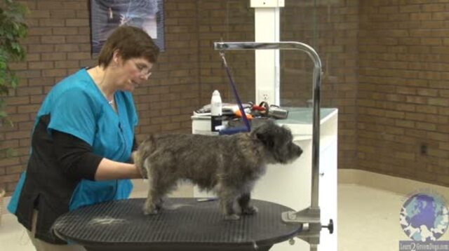 Thumbnail for Grooming the Cairn Terrier