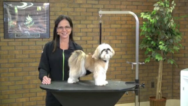 Thumbnail for Grooming a Shih Tzu with an Asian Influenced Head Style (Part 1 of 3-Part Series: Setting the Body Pattern)