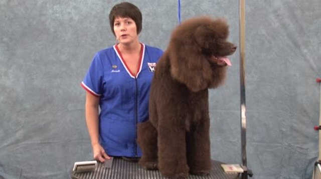 Thumbnail for Grooming the Irish Water Spaniel: Clipper Work (Part 1 of 4-part Series)