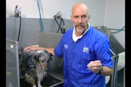 Thumbnail for Bathing a Heavy Coated Dog to Get It Super Clean