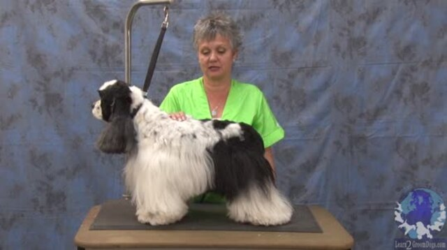 Thumbnail for Getting 'er Done Series: Grooming a Pet American Cocker in a Modified Show Trim