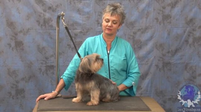 Thumbnail for Grooming a Yorkie Mix in a Personality Trim