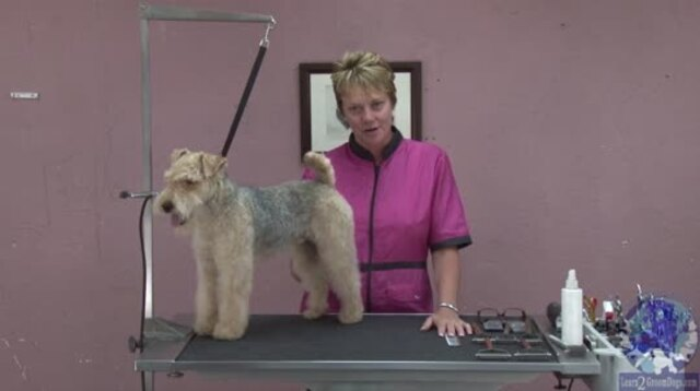 Thumbnail for Grooming the Pet Lakeland Terrier (Part 1 of 3-part Series)