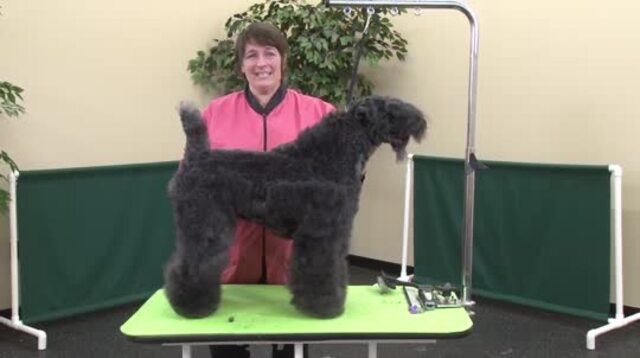 Thumbnail for Fix-It Tips Using a Kerry Blue Terrier