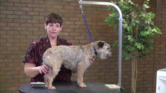 Thumbnail for How to Do a Pet Strip/Clip on a Border Terrier