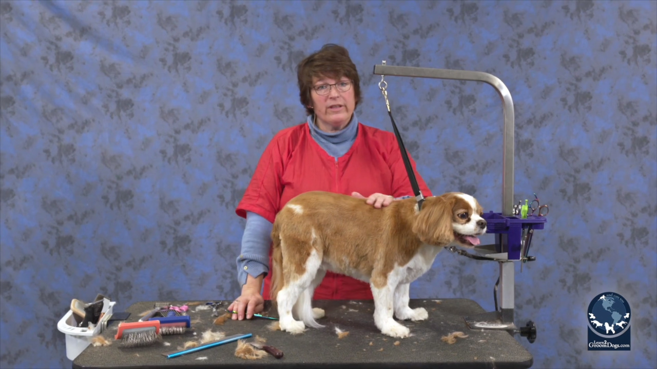 Thumbnail for How To Do an Easy Maintenance Trim on a Pet Cavalier Spaniel